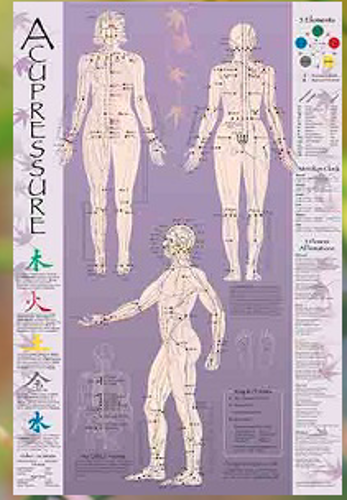 Picture of Acupressure Point Chart – Laminated