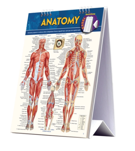 Picture of QuickStudy | Anatomy Easel
